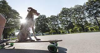 Tierhalterhaftpflicht: Hund